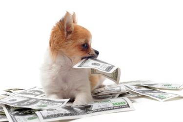 Assicurazione cane assicurazione casa quali - Assicurazione casa si puo detrarre dal 730 ...